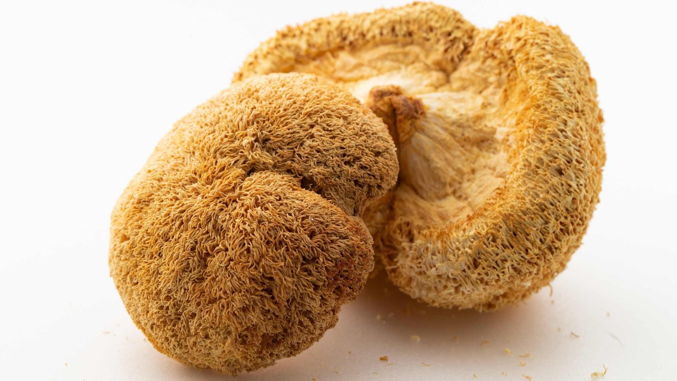 lion's mane paddenstoelen