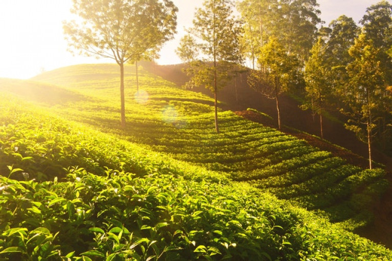 thee tuinen india