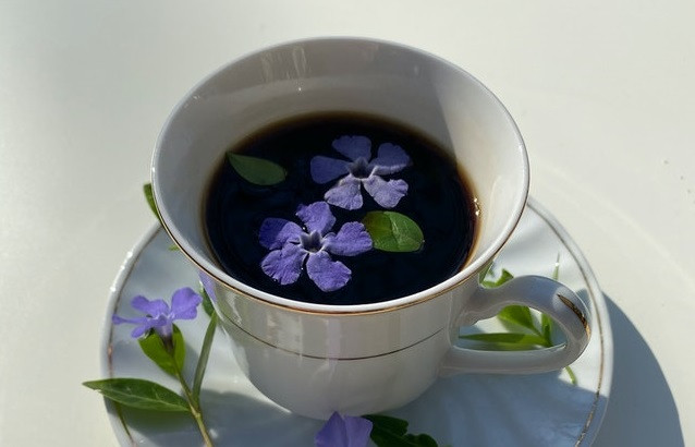 Waarom Moringa thee drinken