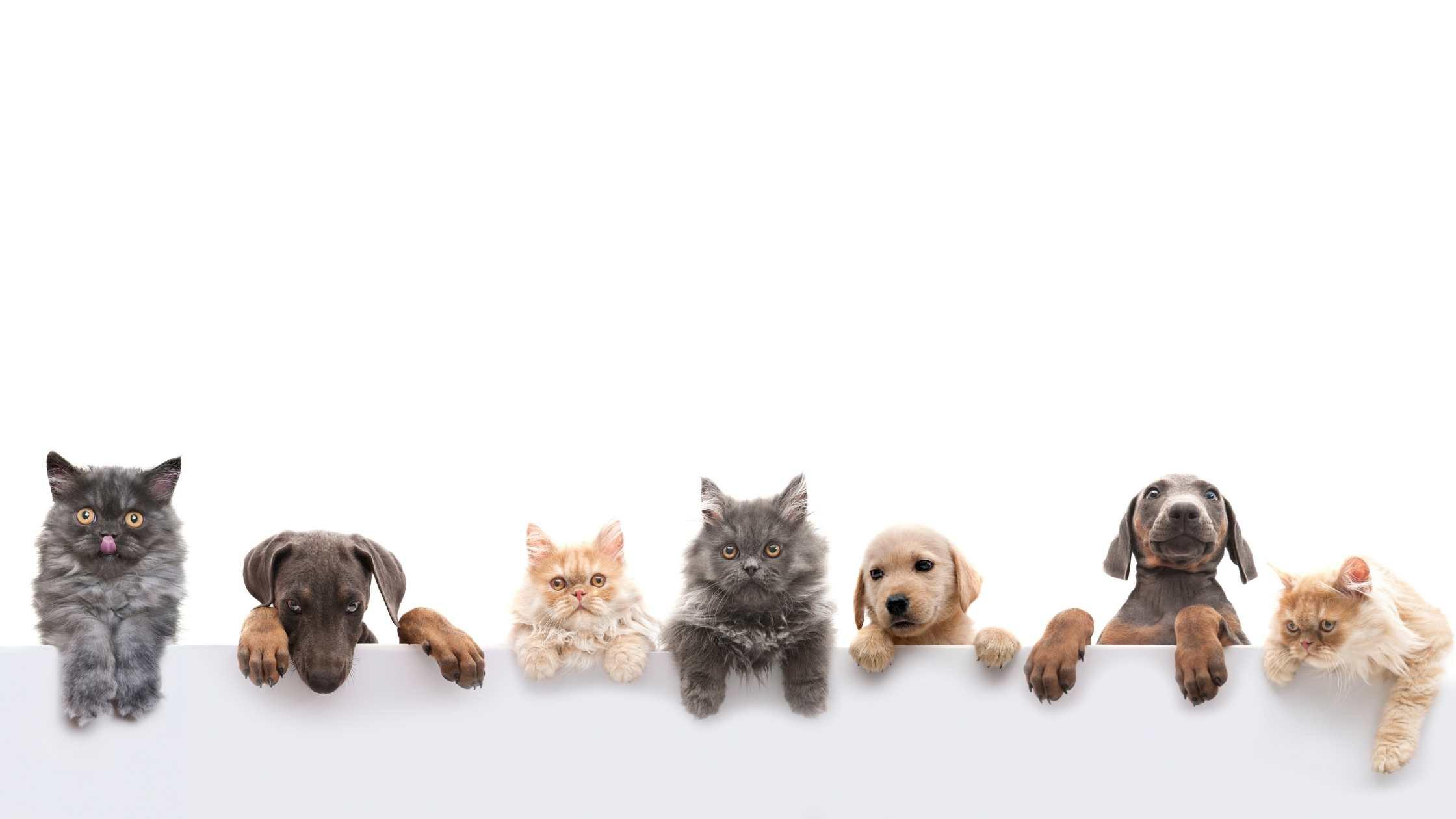 ashwagandha huisdieren